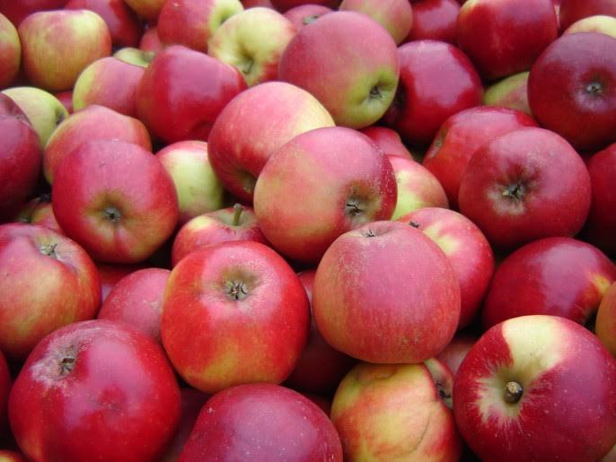 Verse appeltjes
